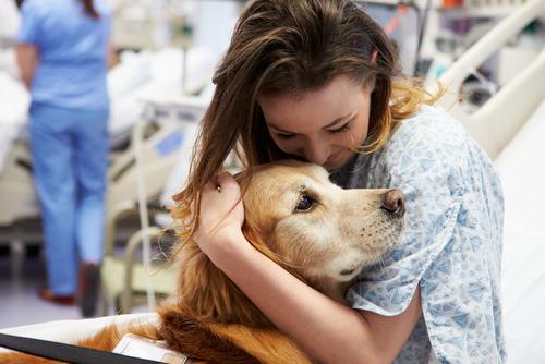Onkologickým pacientom bude pomáhať aj liečba kanisterapiou