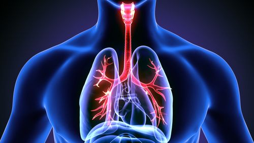 Dýchací (respiračný) systém