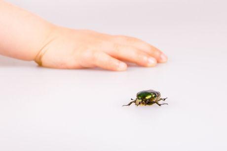 6 babských rád, aby vás neuštipol hmyz